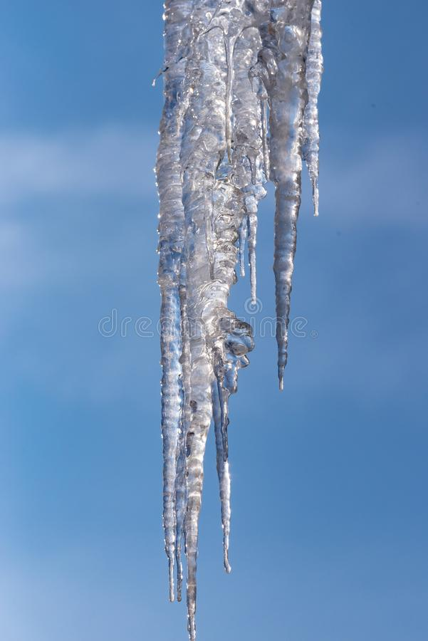 Dangerous big frosty icicles. stock images