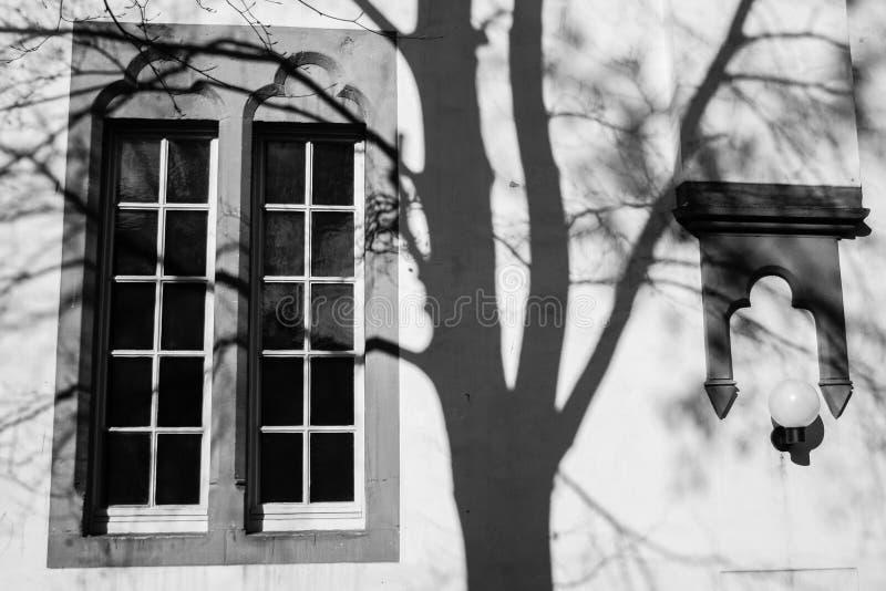 Finestra aperta e tonalità di un albero sulla parete fotografie stock