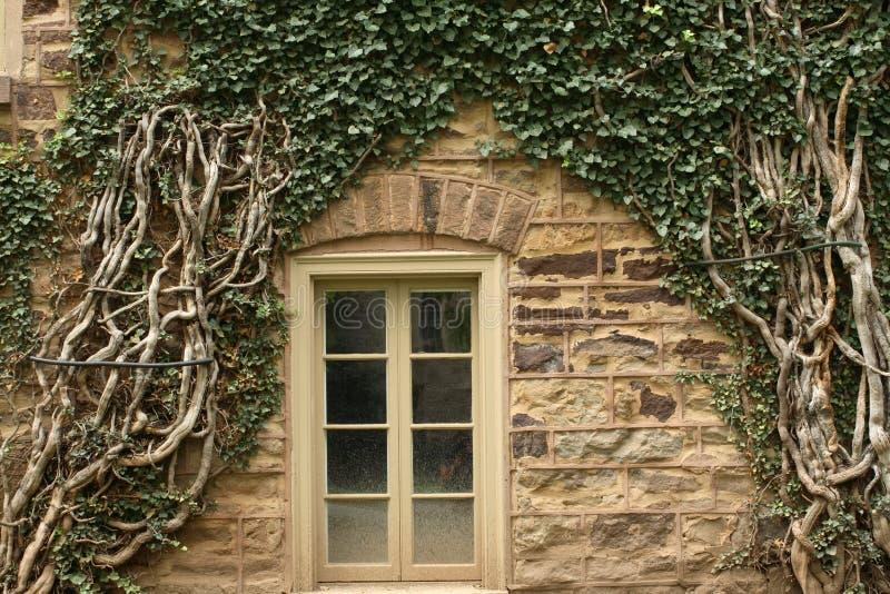 Finestra circostante dell'edera. fotografia stock