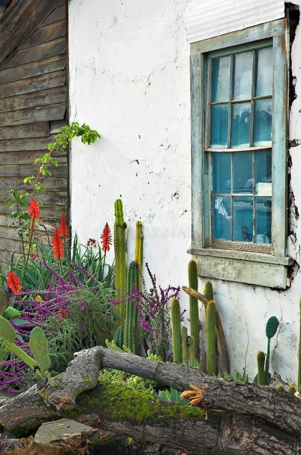 Finestra del giardino del cactus immagini stock libere da diritti