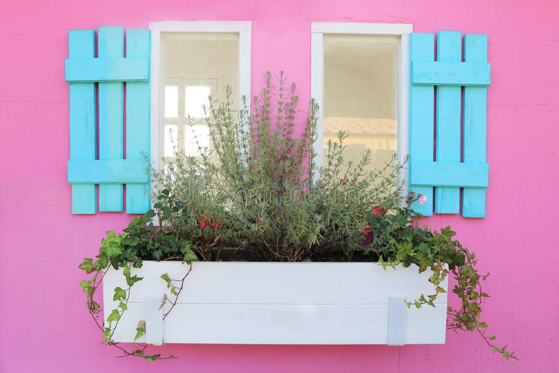 Finestra di legno pastello blu con il vaso della pianta sulla parete rosa dolce, stazione termale fotografia stock libera da diritti