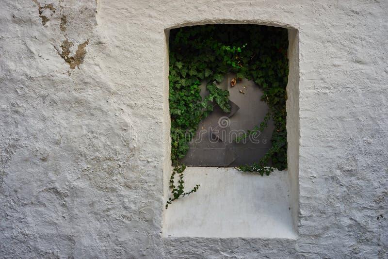 Finestra di piastra metallica chiusa, invasa con l'edera, su una parete bianca fotografia stock libera da diritti