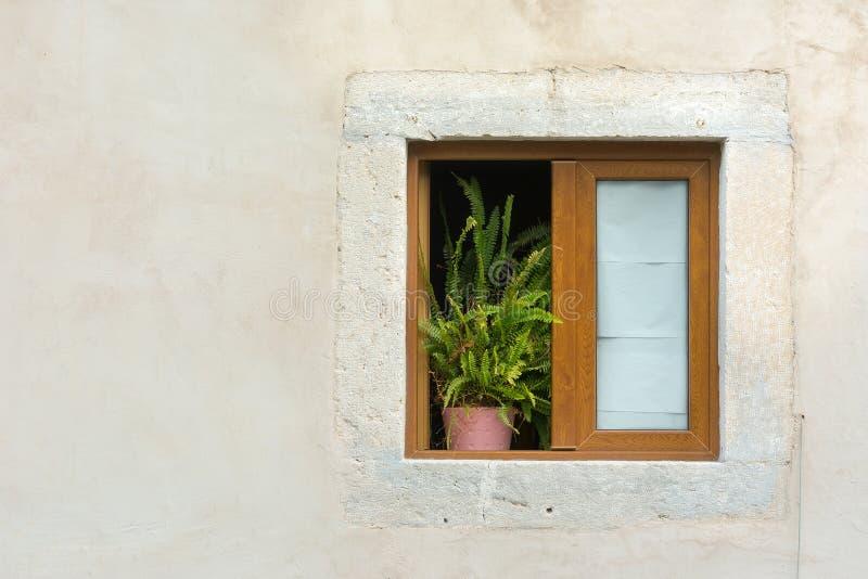 Finestra incorniciata di legno con la pianta in vaso immagini stock libere da diritti