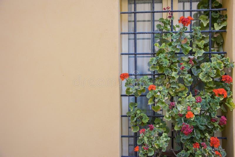 Finestra italiana con la griglia del metallo, decorata con i fiori freschi immagine stock