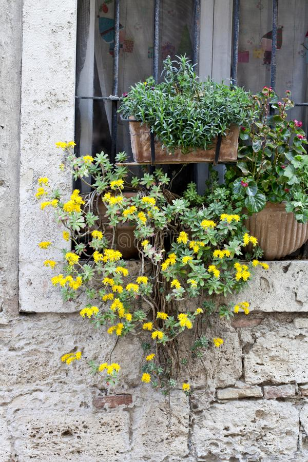 Finestra italiana decorata con i fiori immagini stock