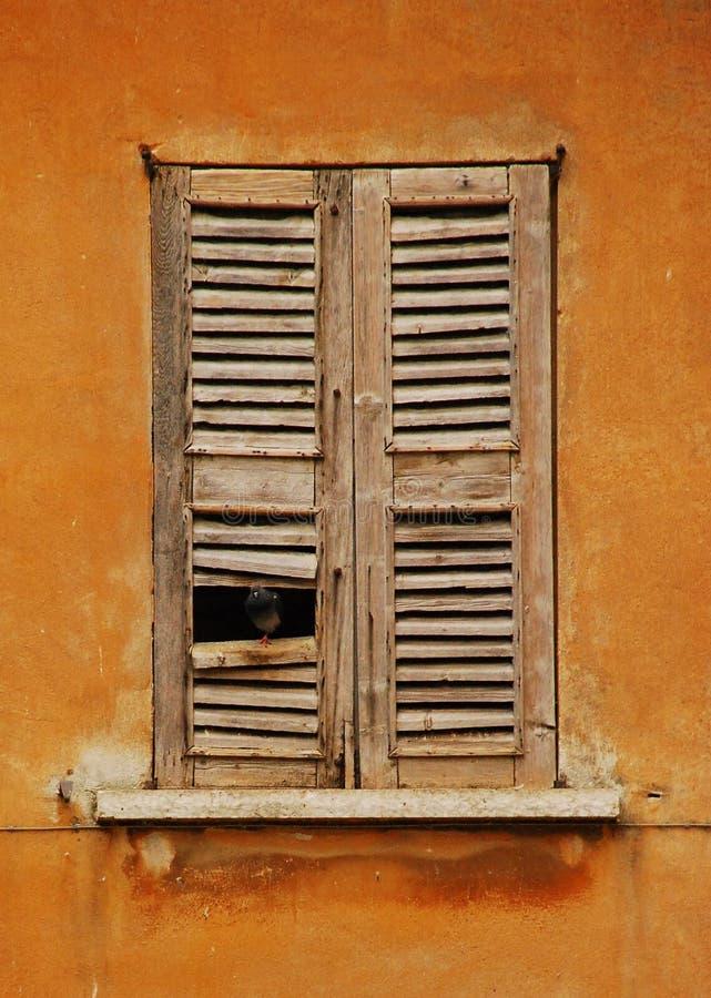 Finestra a Mantova con il piccione fotografia stock libera da diritti