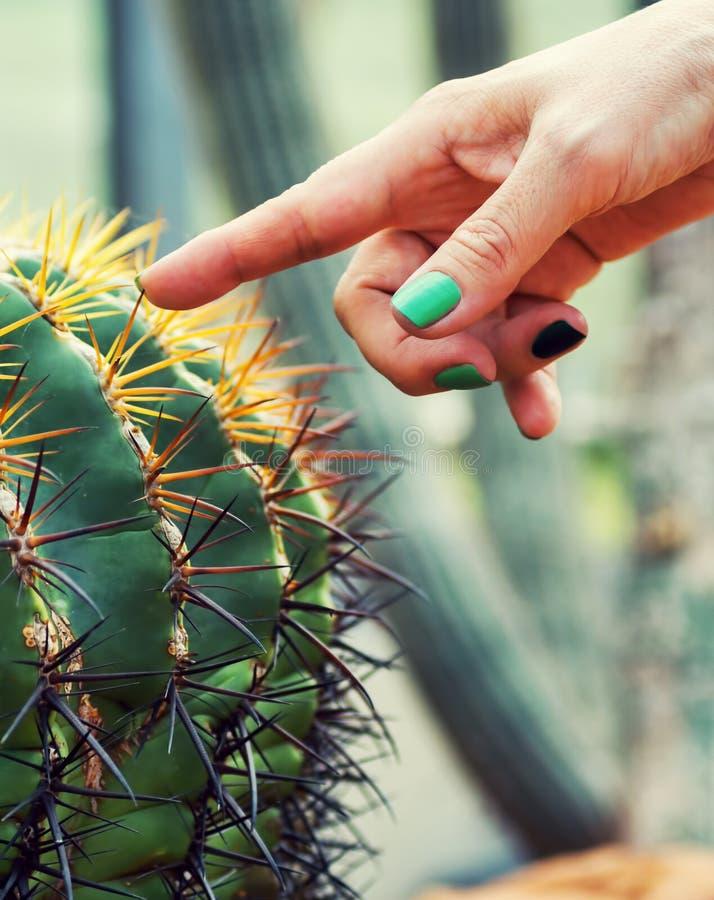 Finger De La Mujer Con El Cactus Conmovedor Del Esmalte De Uñas ...