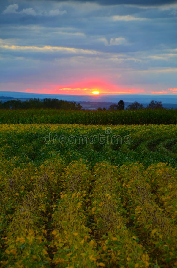 Finger Lakes sunset over late summer crop field. Hills surrounding Cayuga Lake in the Finger Lakes region of NYS. Sunset captured illuminating crops in stock photo