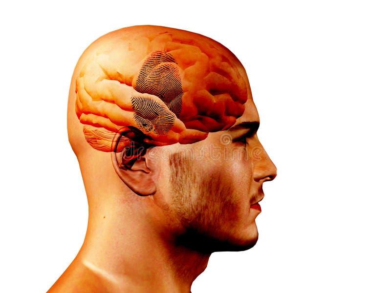 Fingerabdruck auf Gehirn lizenzfreie abbildung