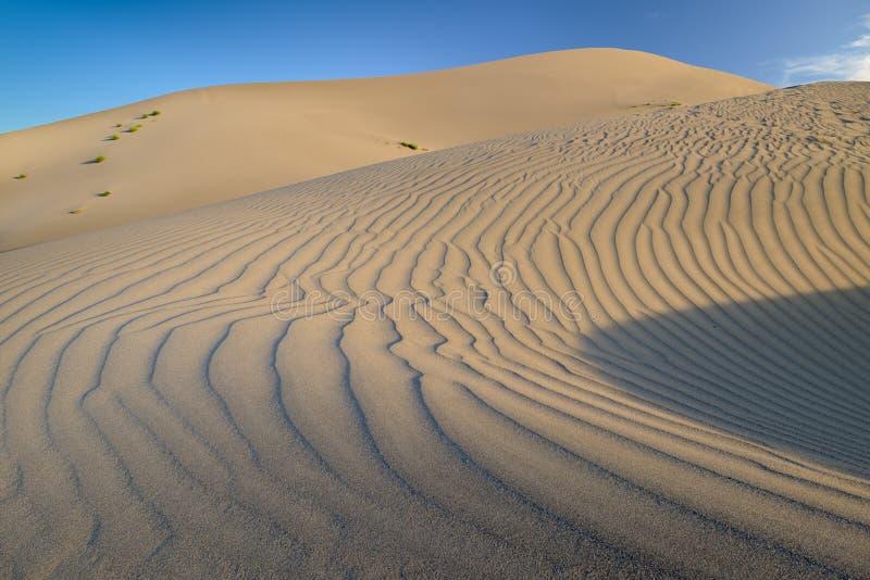 Fingeravtryck av en sanddyn i krusningar royaltyfri bild