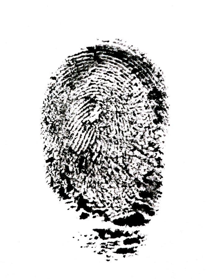 Fingerprint. stock image