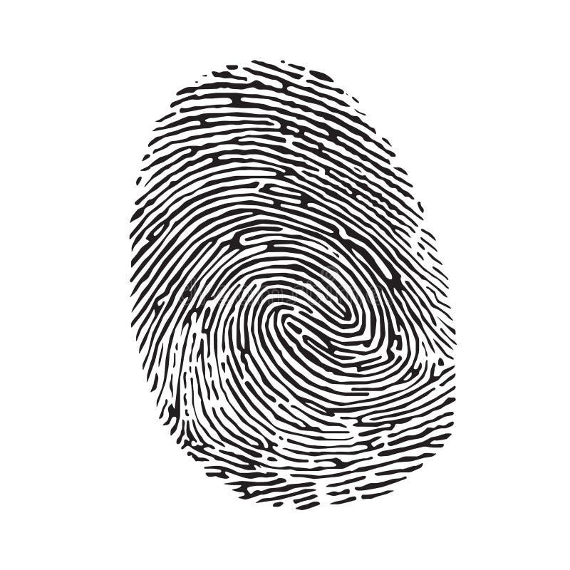 fingerprint illustration stock