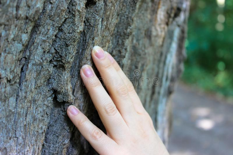 The fingers that touch the bark of the old tree. royalty free stock photos