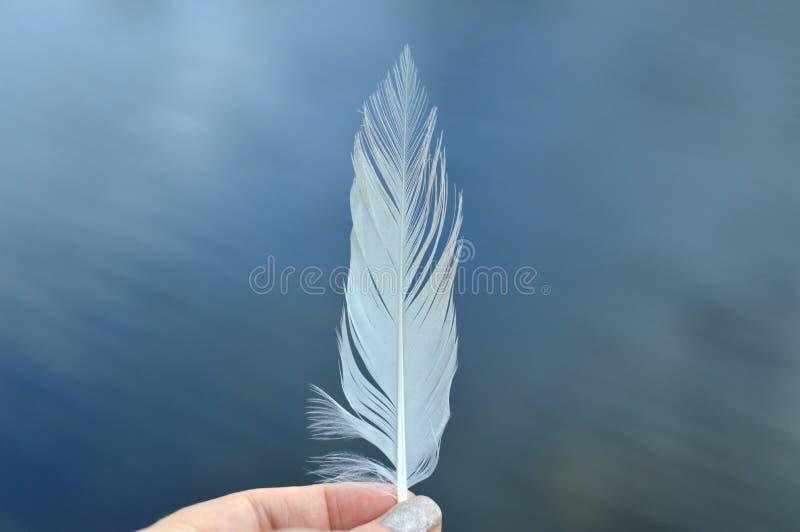Fingrar som rymmer en vit fjäder royaltyfria bilder