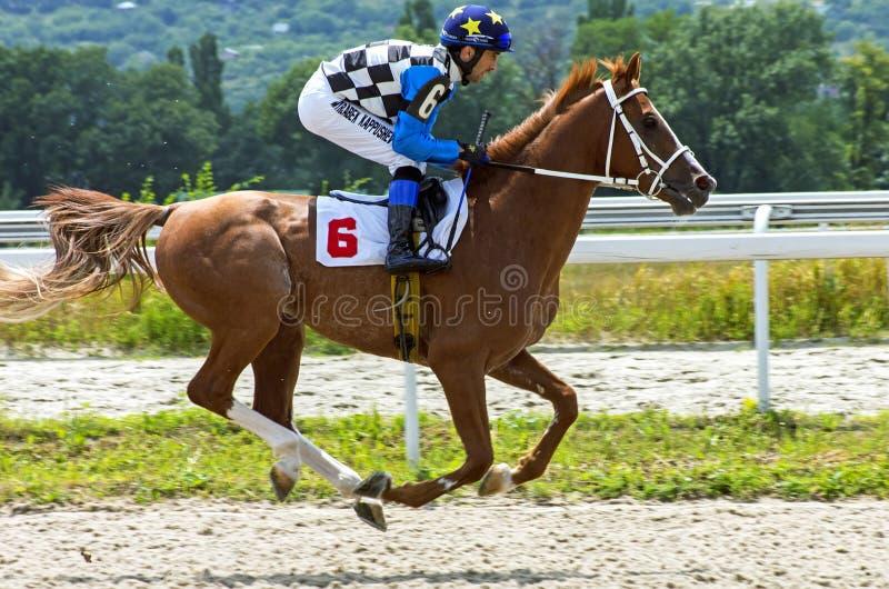 Finish horse race stock photo