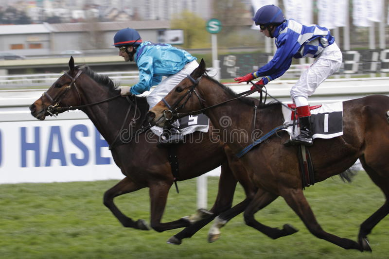 Finish of horse racing race in Grand prix FRBC royalty free stock photo