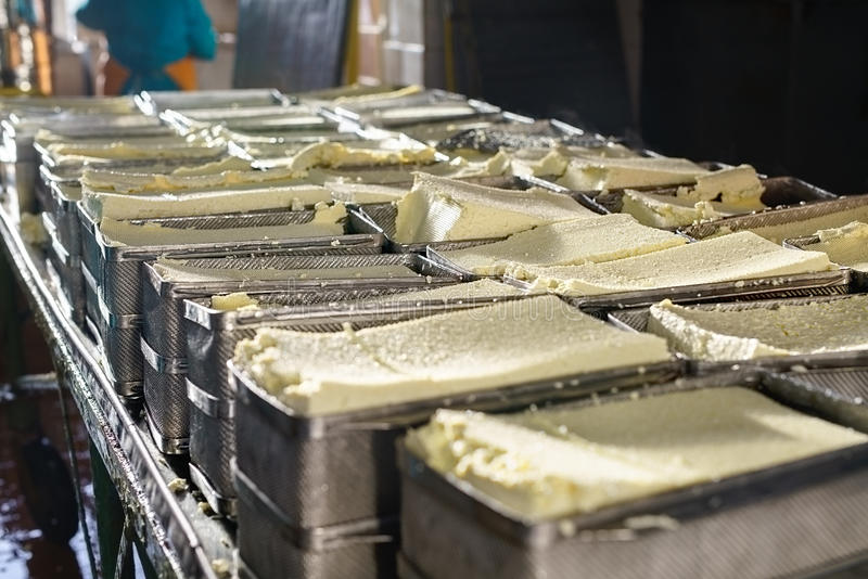Finished dairy product at production line. Finished fresh cheese product in metal containers at automatic production line at dairy plant royalty free stock images