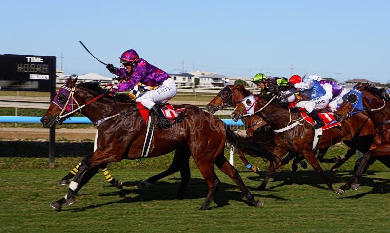 Finition de course de cheval photos libres de droits
