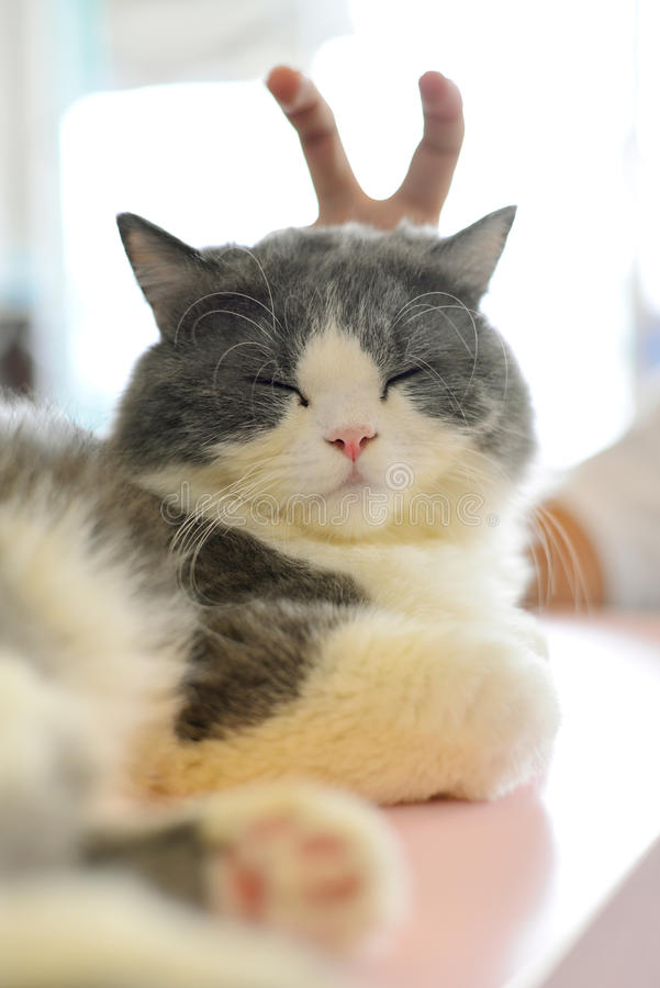 Finja el gato fotografía de archivo libre de regalías