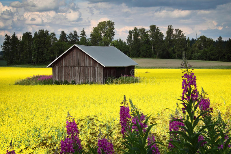 Finland: Bright colors of summer stock photos