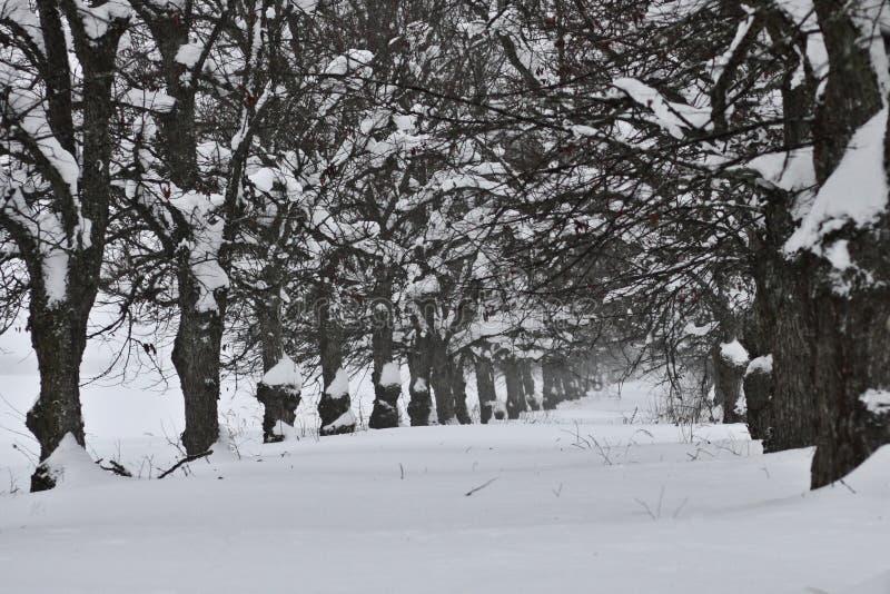 Finland: Gloomy Winter