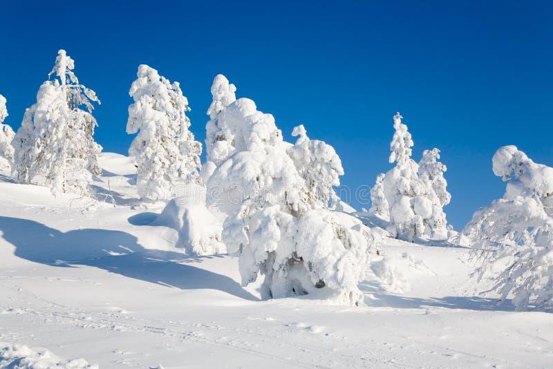 finland Lapland obraz stock