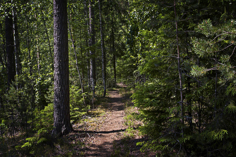 Finland: Path through the forest. Trekking train leading through a dense forest in Finland on a sunny and hot summer day stock images