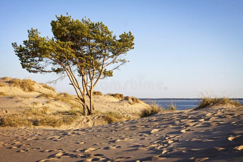 Download Finland: Yyteri beach stock image. Image of dyne, shoreline - 20969789