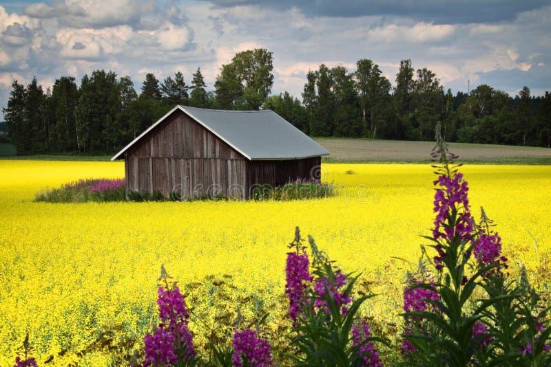Finlandia: Colores brillantes del verano fotos de archivo
