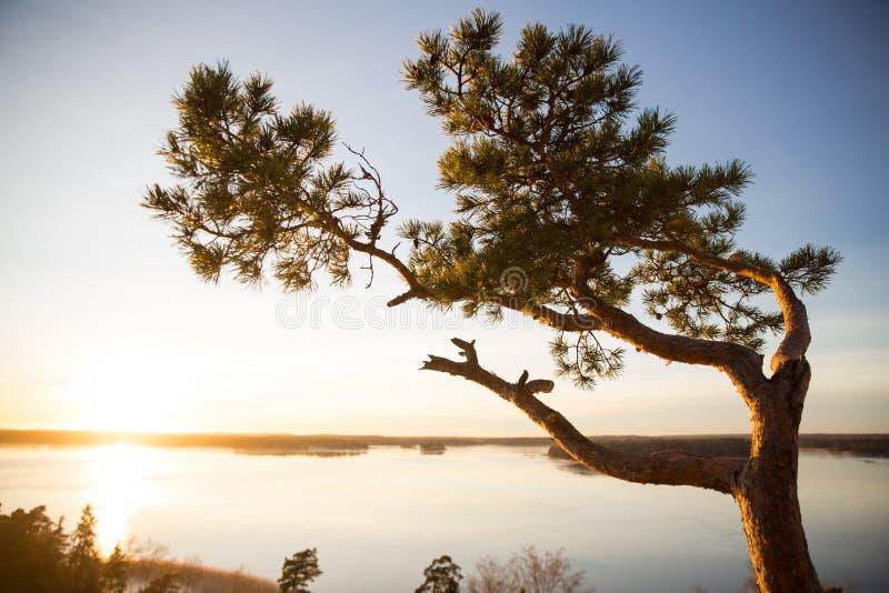 Finlandia, Helsinki, opóźniona jesień Morze Bałtyckie, zatoka obraz royalty free