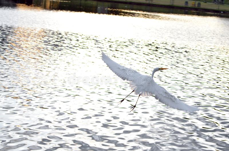 finna fred och lugn i floden royaltyfria foton