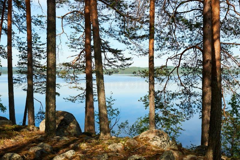 Finnische Landschaft mit Bäumen und See stockbild