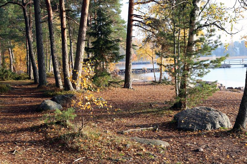 Finnish Nature: Forest Including Trees, Footpath and Calm Sea stock photo