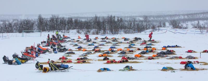 Finnmark, Noorwegen 9 Maart, 2019: Hond sledding competities Finnmarkslopet Teams op vakantie royalty-vrije stock foto