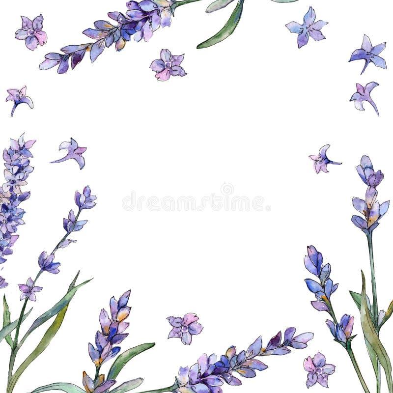 Fiołkowa lawenda Kwiecisty botaniczny kwiat Ramowy rabatowy ornamentu kwadrat ilustracji