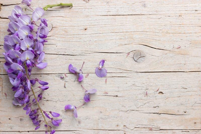 Fiołkowi żałość kwiaty zdjęcia stock
