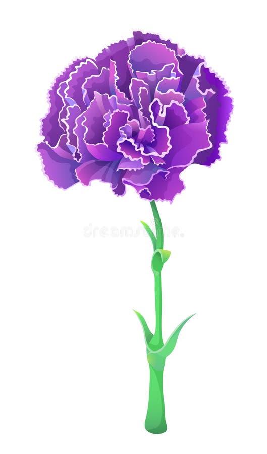Fiołkowy goździk odizolowywający na białym tle Piękny wektorowy kwiat ilustracji