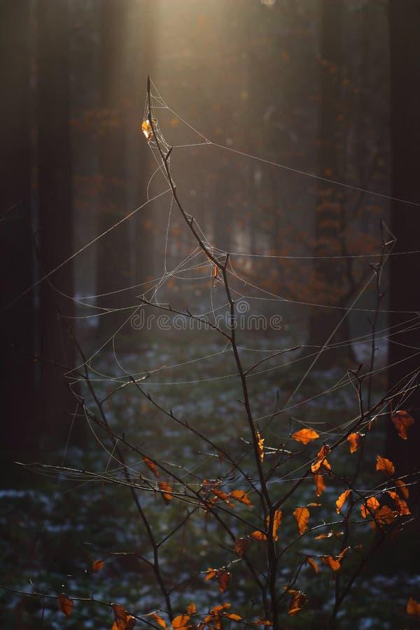 Fio de teia na floresta místico imagens de stock royalty free