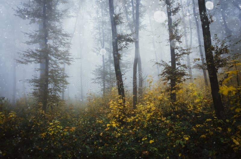 Fiocchi della neve che cadono sopra la foresta variopinta fotografie stock libere da diritti