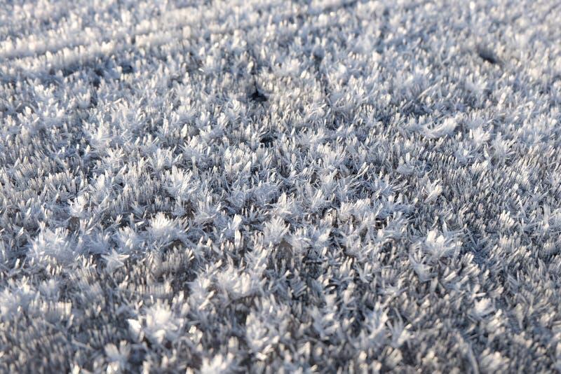 Fiocchi di neve di mattina immagini stock libere da diritti