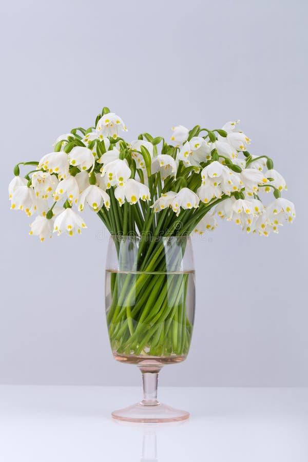 Fiocco di neve della primavera immagine stock