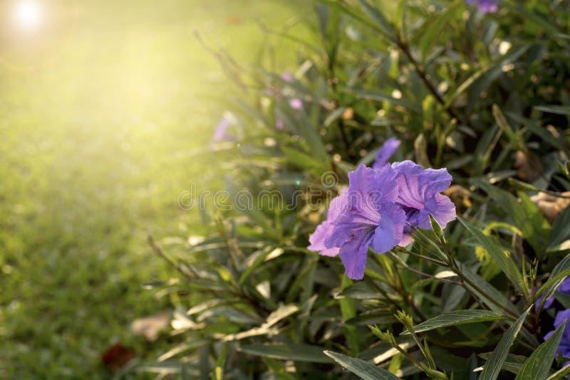 fioletowe kwiaty obraz stock
