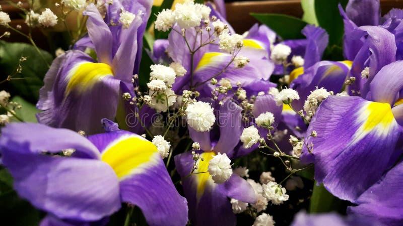 fioletowe kwiaty obrazy stock