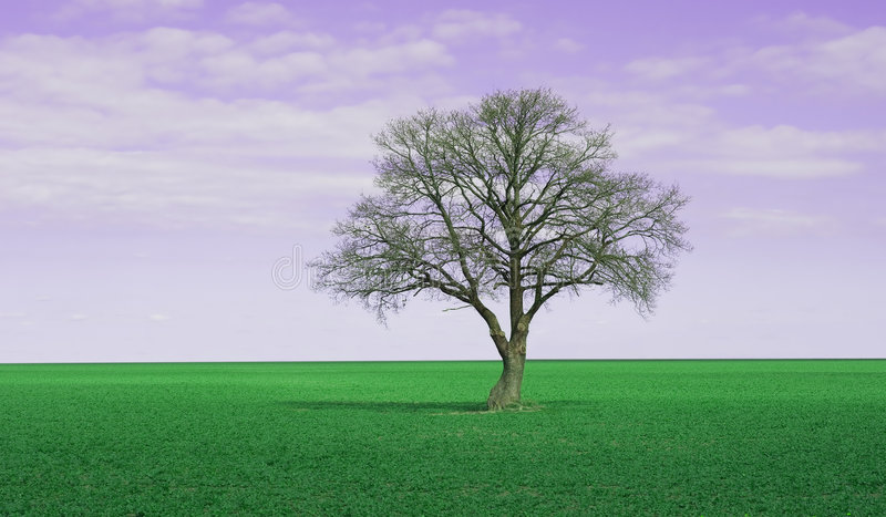 fioletowy niebo obrazy royalty free