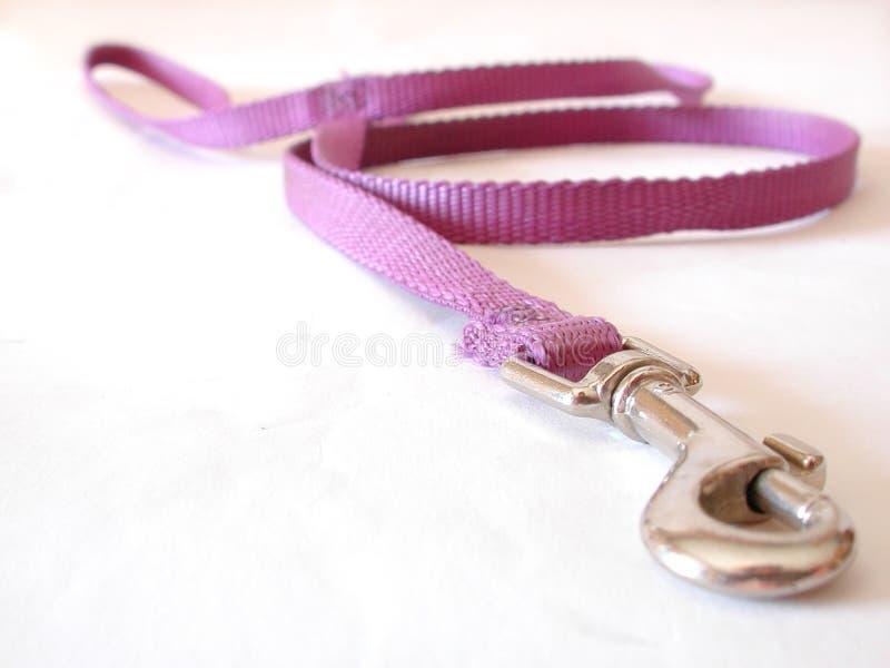 fioletowy psa na smyczy zdjęcie stock