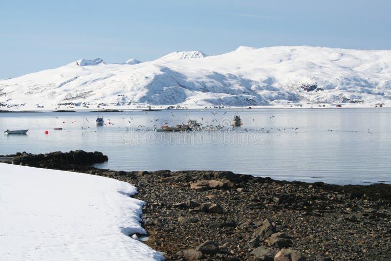 Fiordo de la pesca de Mikkelvik fotos de archivo libres de regalías
