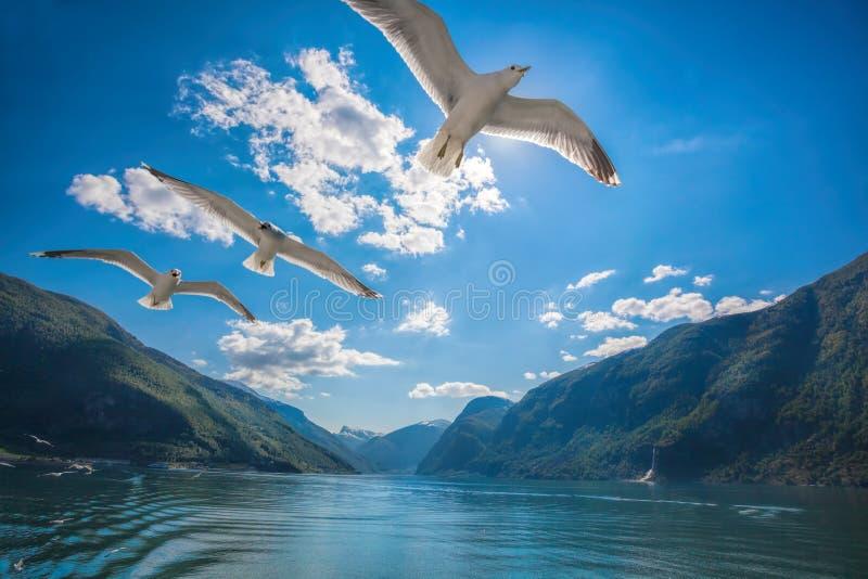 fiordos con los pájaros cerca del Flam en Noruega imágenes de archivo libres de regalías