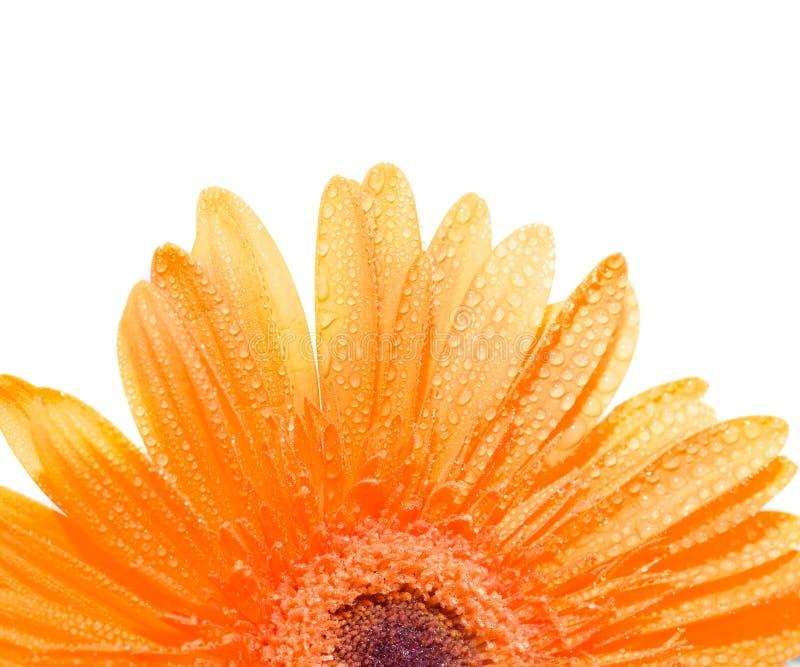 Fiore immagine stock