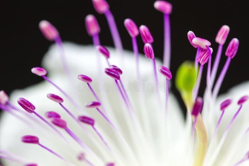 Fiore stock foto