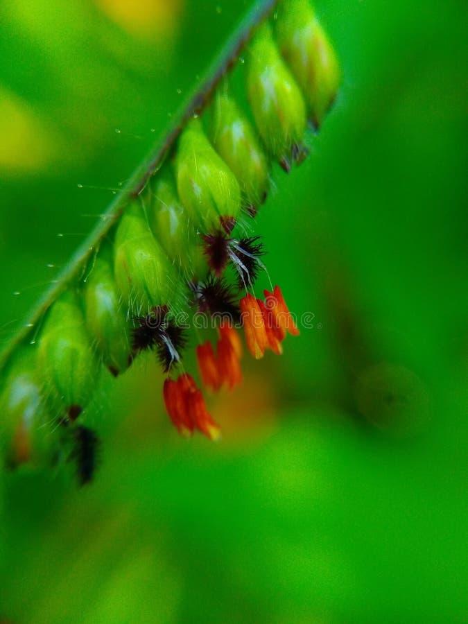 Fiore fotografie stock libere da diritti